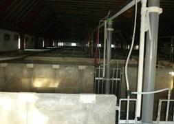 40 slagtesvinstier beton