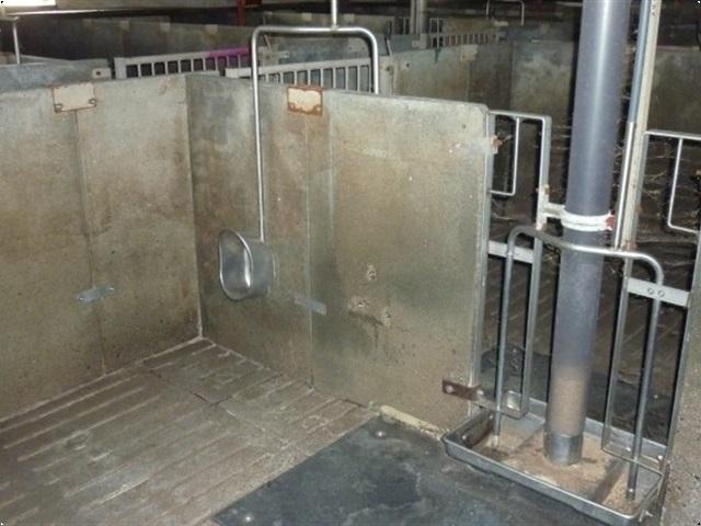 - - - 20 slagtesvinstier beton