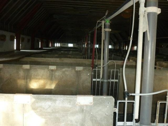 - - - 40 slagtesvinstier beton